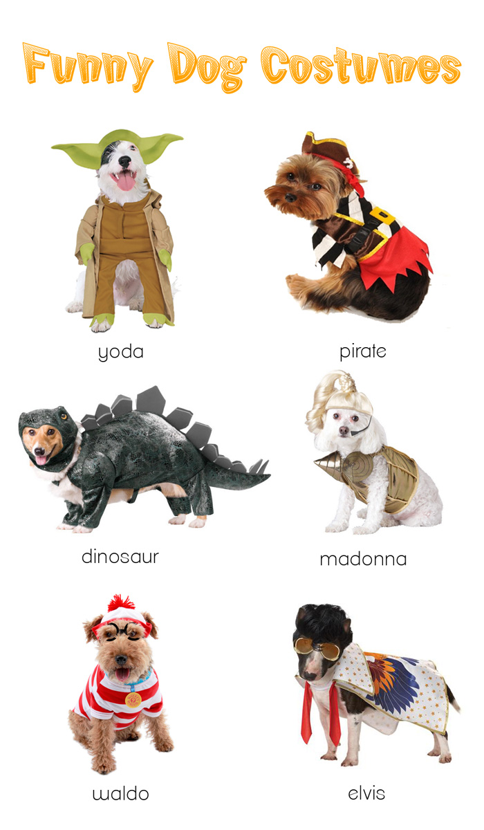 Funny Dog Costumes Halloween 2012