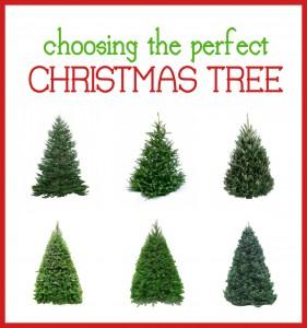 choosing the perfect tree