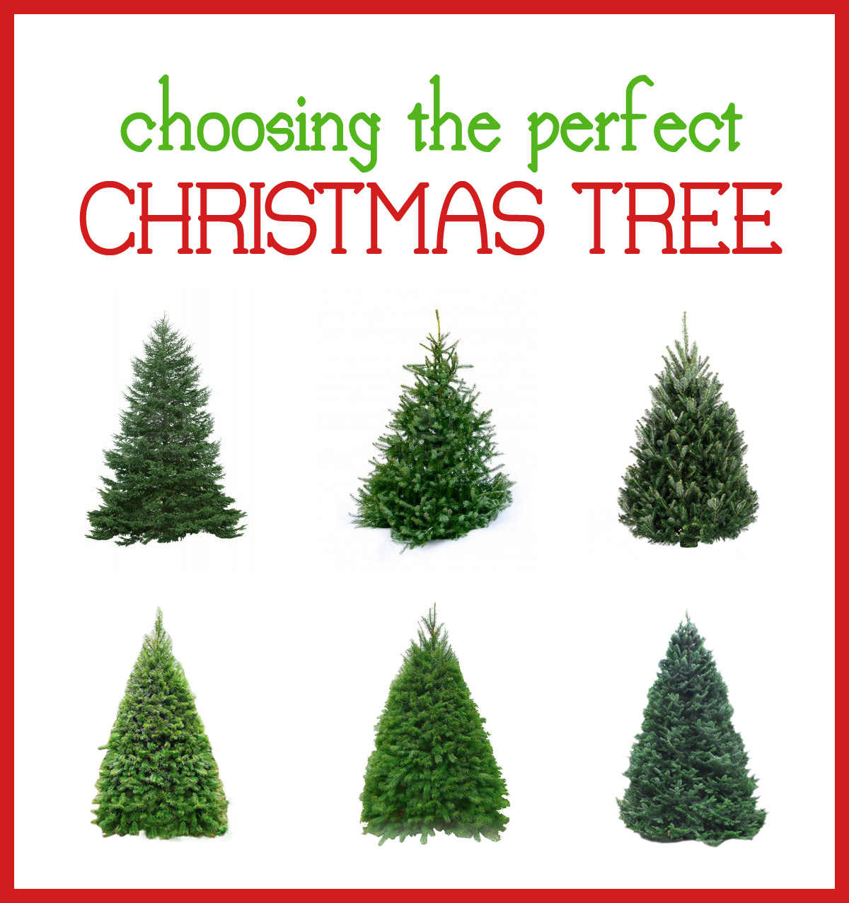 the perfect tree - Type Of Christmas Trees