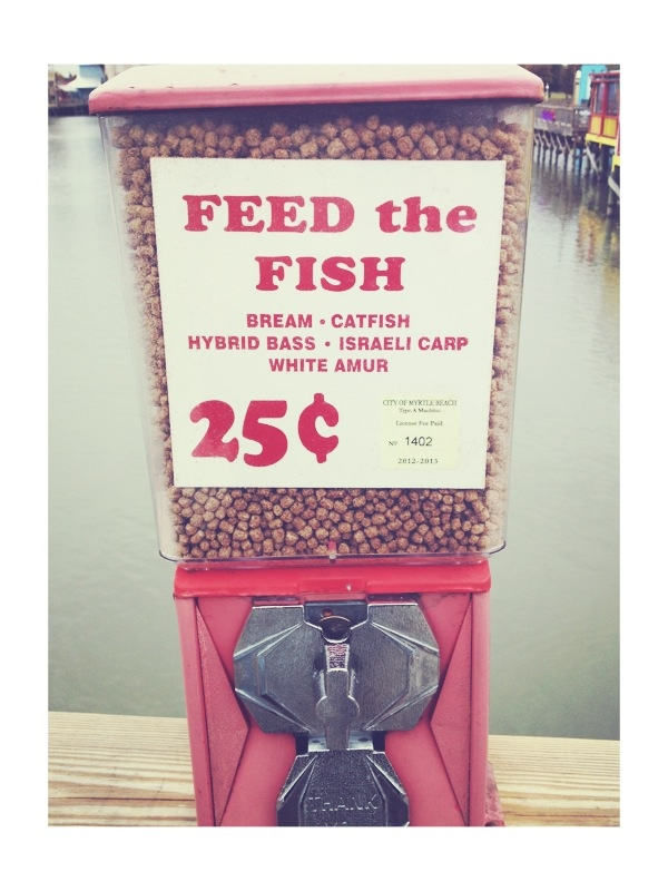 feed the fish - giving