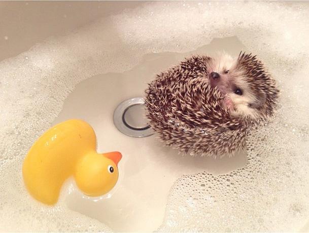 BiddyTheHedgeHog_Bath