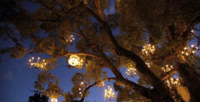 a chandelier tree