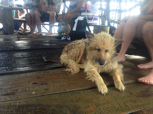 Dog at the Pelican Bar in Jamaica