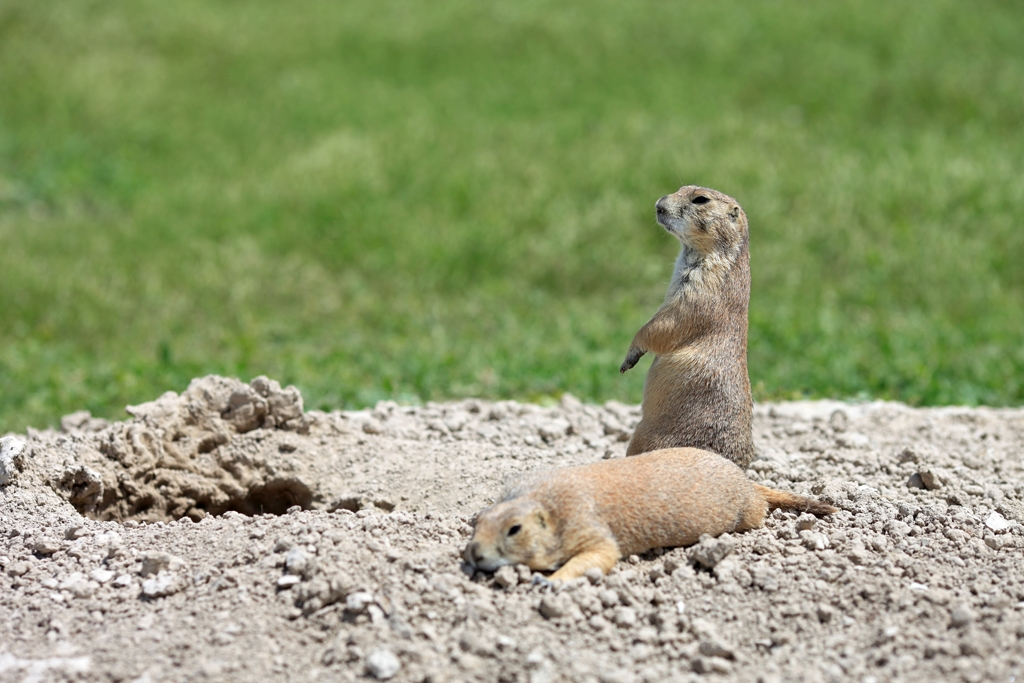 Prairie Dog Town USA